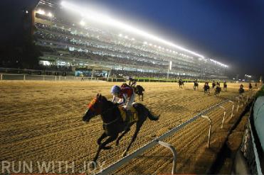 Ипподром Сеула | Seoul Race Park