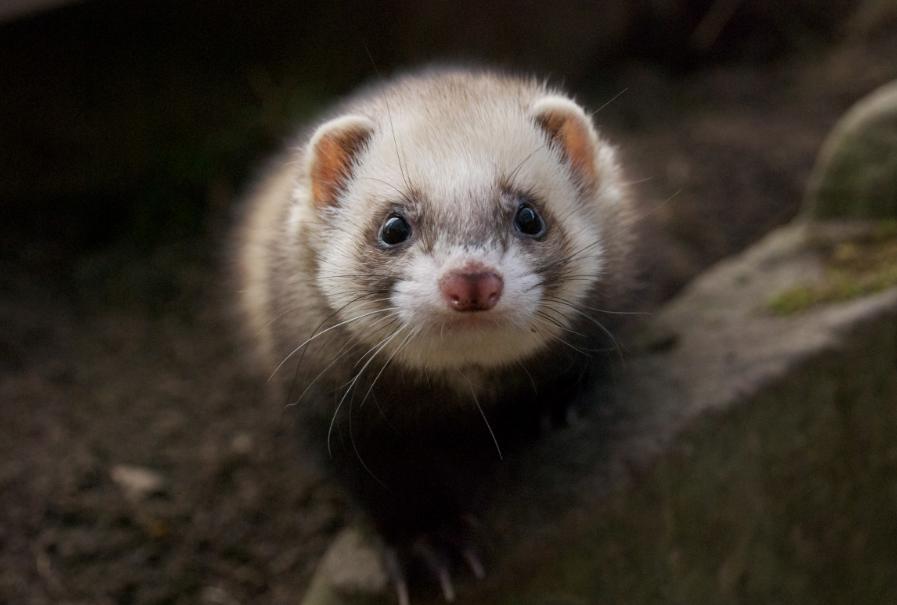 Сеульский детский зоопарк 어린이대공원동물원