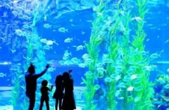 Lotteworld aquarium 롯데월드아쿠아리움