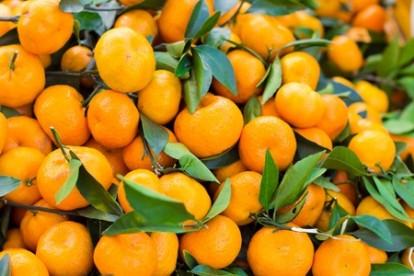Фестиваль мандаринов на о. Чеджудо