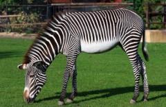 Пусанский детский зоопарк 부산어린이대공원동물원